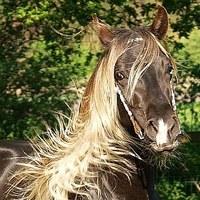 Hoe fotografeer ik een paard