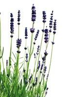 Hoe gebruik ik aromatherapie