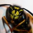 Hoe behandel ik een wespenbeet
