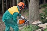 Hoe kap ik veilig een boom