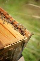 Hoe houd ik bijen