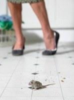 Hoe vang ik diervriendelijk muizen