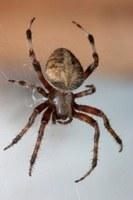 Hoe verjaag ik spinnen uit mijn huis