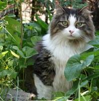 Hoe houd ik poepende katten uit mijn tuin