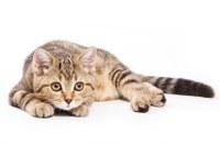 Hoe ontworm ik mijn kat