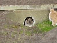 Hoe maak ik een buitenren voor mijn konijn