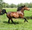 Hoe geef ik mijn paard een glanzende vacht