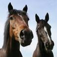 Hoe koop ik een paard