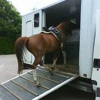 Hoe leer ik mijn paard trailerladen