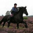 Hoe maak ik veilig een buitenrit met mijn paard