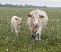 Hoe herken ik biologisch vlees